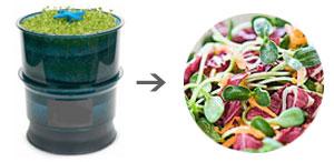 Sunflower Salad