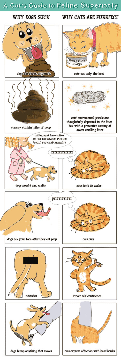 Similarities And Differences Of A Dog And Cat